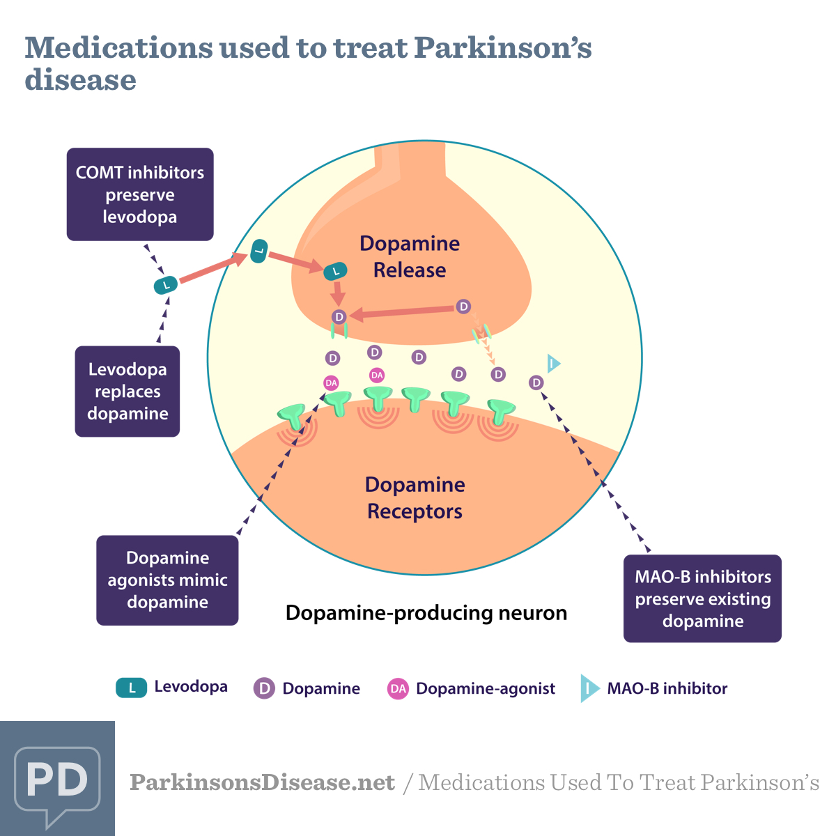 Medications Used To Treat Parkinson's