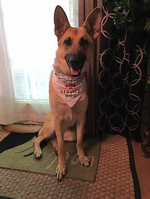 Picture of the service dog Maia