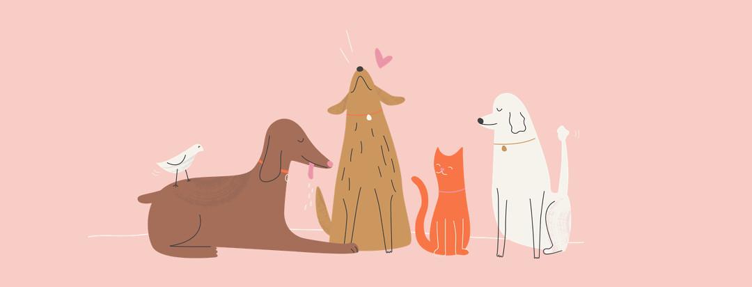 Image of loving pets.