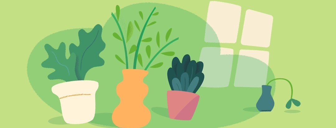 Three healthy plants and one droopy apathetic plant sitting on a windowsill
